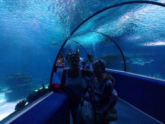 Sazova Park: eşim ve annem le su dünyası