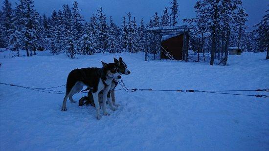 Ivalo, Finlande : DSC_3888_large.jpg