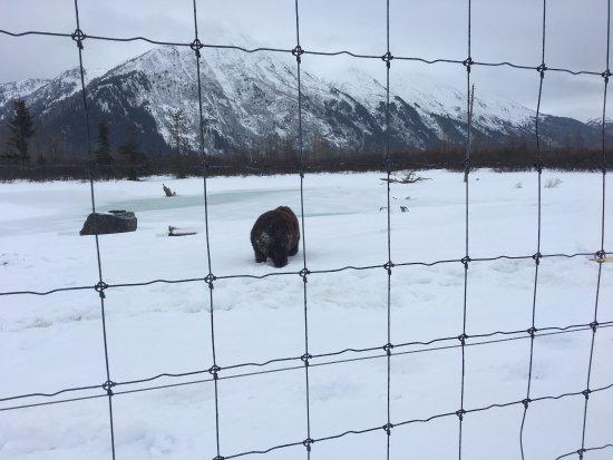 Alaska Wildlife Conservation Center : photo1.jpg