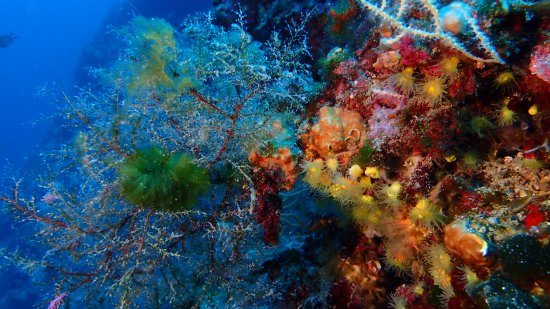 Tisno, Croatia: Diving Center Tramonto