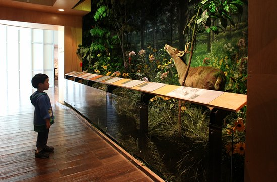 The Peggy Notebaert Nature Museum Explore Flora And Fauna Of Illinois Midwest