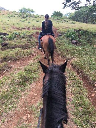 Franklin's Horseback Riding: En camino a los senderos.
