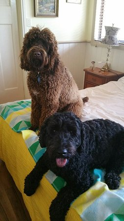 Must Love Dogs B&B & self contained cottage: Relaxing on our holiday at must love dogs b&b. Rutherglen