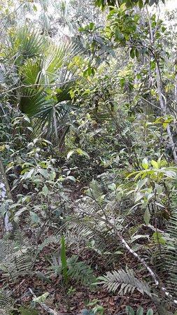 Fern Forest Nature Center : Neben vielen Farnarten auch ein Eindruck von Urwald