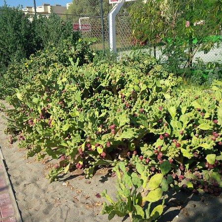 Santa Marina: jardin