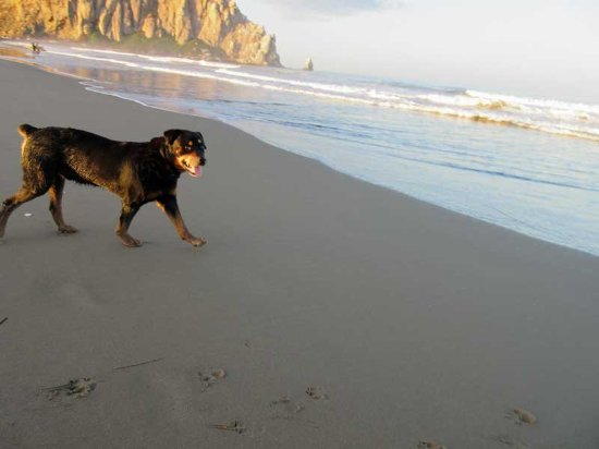 Pescadero, CA: Despite their rudeness, Kirby (14) made it to the Pacific Ocean and had a ball!.