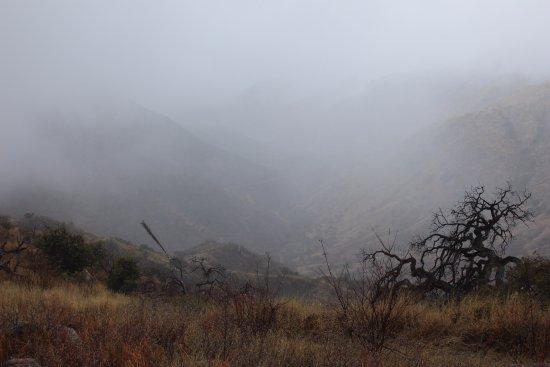 Sonora Foto