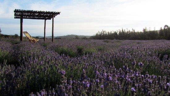 Terraza Mirador Del Cultivo Picture Of Granja Aromatica
