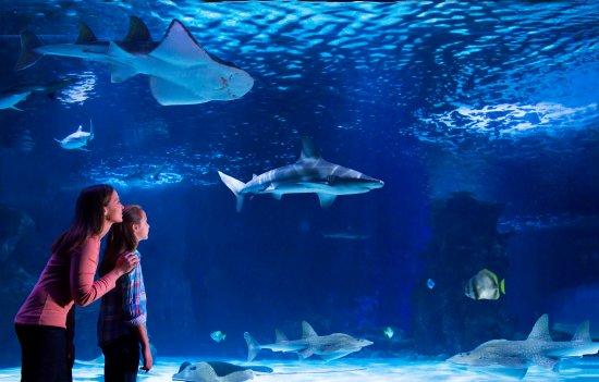 Covington, KY: Newport Aquarium