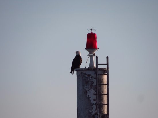 Richmond, Canadá: Eagle on the lookout