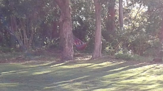 Mapleton Falls Accommodation: The hammock out back