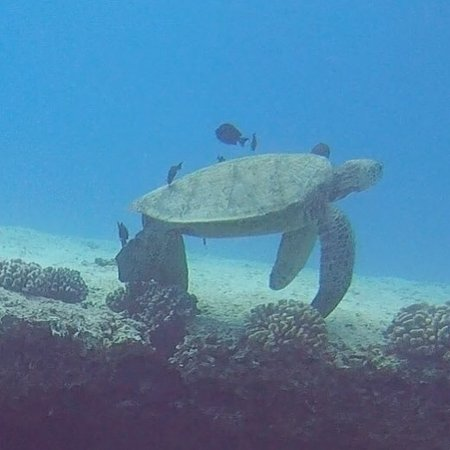 Island Divers Hawaii : photo1.jpg