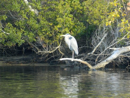 Beaufort, Carolina do Norte: The Crystal Coast is rich in beauty and wildlife