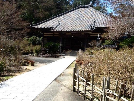Shimoda, Japan: アメリカジャスミンが植わっている庭と本堂