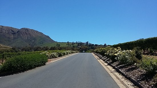 Constantia, South Africa: 20170224_122129_large.jpg