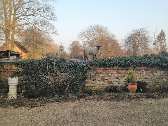 The Fox and Hounds: Local sheep likes to see whats going on