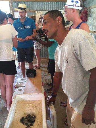 Bayahíbe, República Dominicana: Turtle rescue program