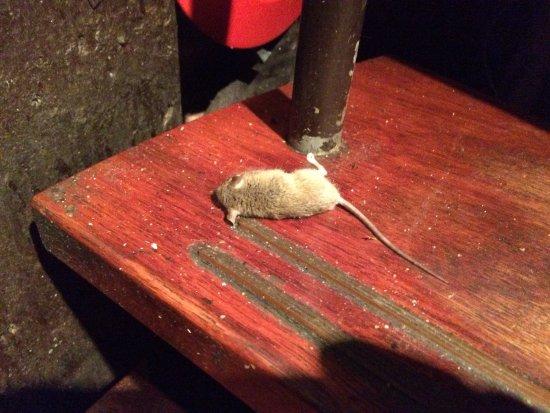 Nieuw-Vennep, The Netherlands: Dode muis op de trap