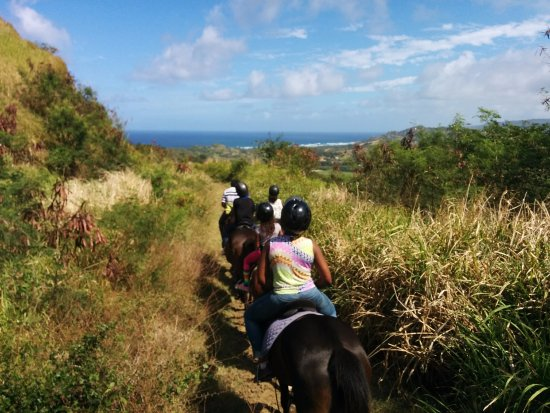 Caribbean International Riding Centre: Wonderful views on the trail - great way to take in the landscape.