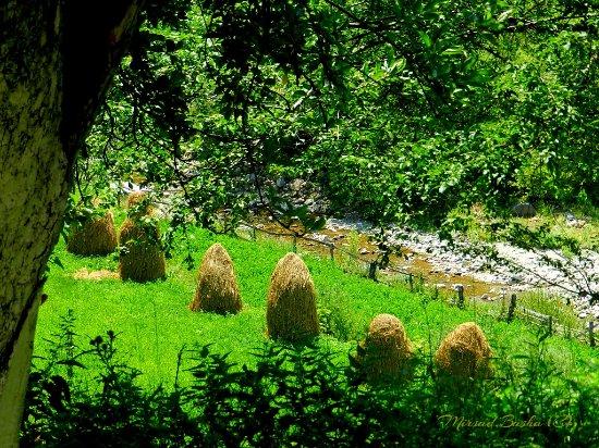 Landscape - Picture of Bujtina Lepushe, Lëpushë - Tripadvisor