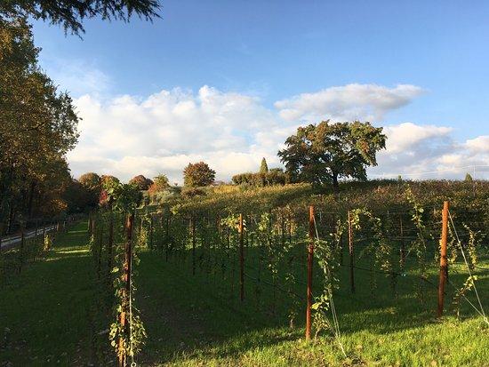 Tenuta Baron Winery