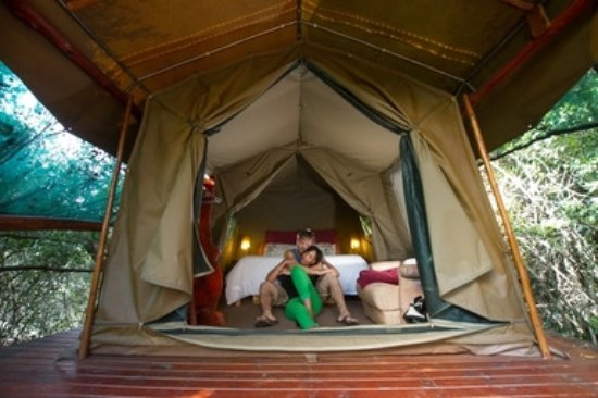 Teniqua Treetops Tree house accommodation tented bedroom in Knysna Garden Route & Tree house accommodation tented bedroom in Knysna Garden Route ...