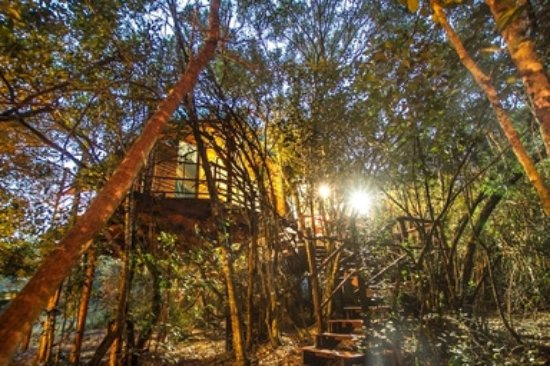 Sedgefield, Sydafrika: Tree house accommodation at Teniqua Treetops, Garden Route, South Africa