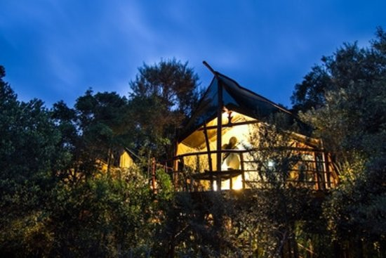 Teniqua Treetops: Tree house accommodation in Knysna, hidden in the indigenous forest