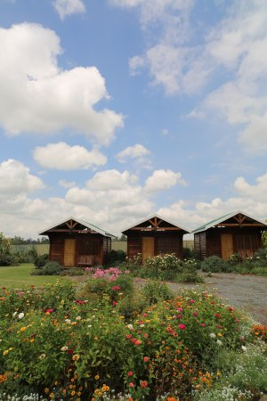 Arbor Guesthouse: 3 log cabins