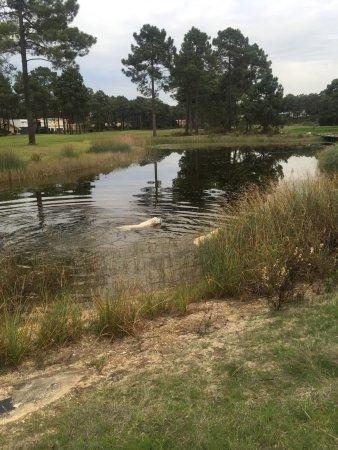 Aroeira Golf Resort : photo1.jpg
