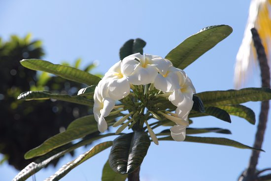 Mayan Bistro: Beautiful trees & flowers