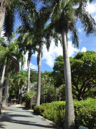 J.R. O'Neal Botanic Gardens : Palm trees by tmhe main entrance