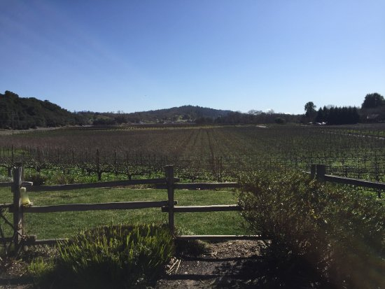 Dutcher Crossing Winery : photo3.jpg