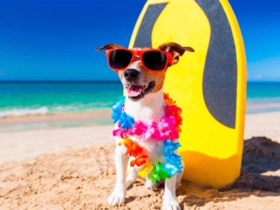 Tropical Breeze Resort: We are Pet Friendly!