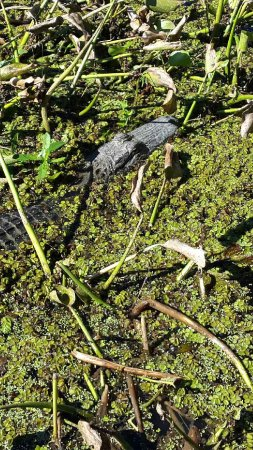 Plaquemine, LA: A few adventures on our swamp tours!