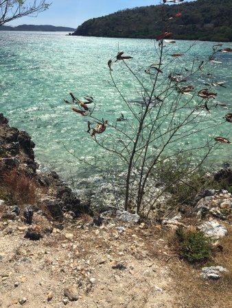 Malcapuya Island : photo1.jpg