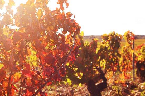 Orange, França: Nos vignes à Châteauneuf-du-Pape
