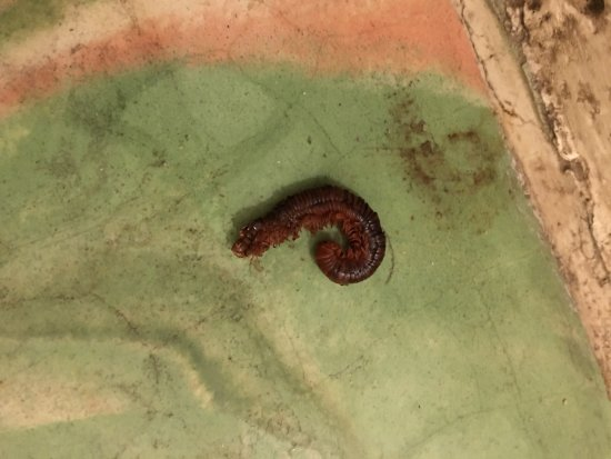 Worm In Our Room Picture Of El Patio Motel Key West Tripadvisor