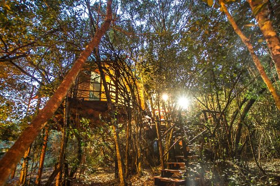 Teniqua Treetops: Tree house acccommodation in Knysna