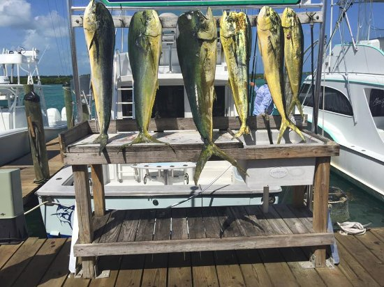 Huntress Fishing Charters