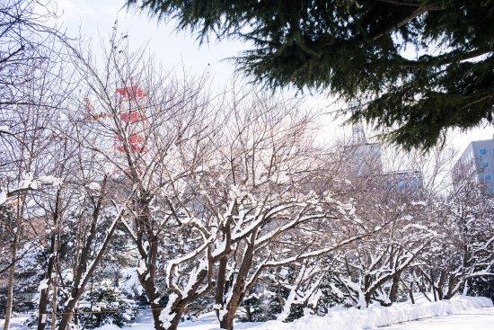 Former Hokkaido Government Office Building: photo4.jpg