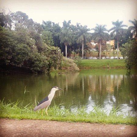 Lago Municipal - Jaboticabal