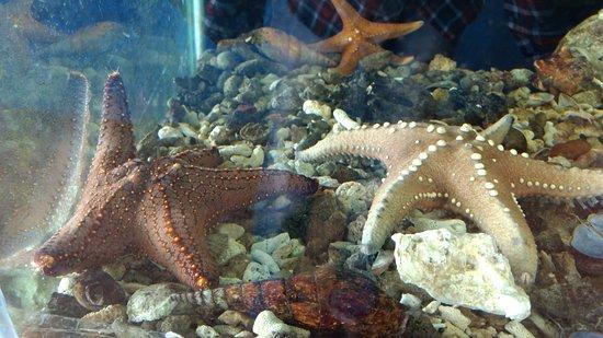 Star Fish Picture Of Varkala Aquarium Varkala Tripadvisor