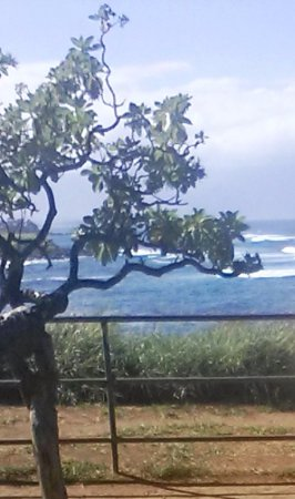 5 minute walk from Aloha Surf Hostel........
