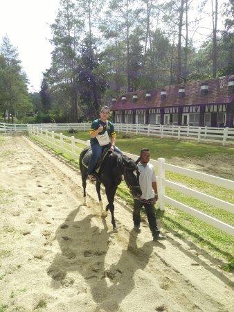 The Paddock: Jalan jalan bersama kuda