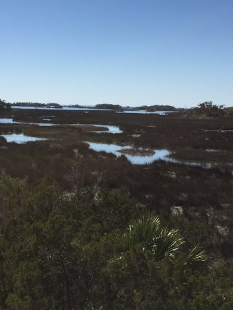 Yankeetown, FL: View from the observation tower. Beautiful!