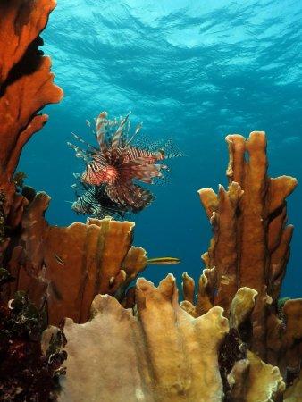 Playa Larga, Cuba: Fauna Marina en Punta Perdiz, magnificos buceos! // Fauna Marina in Punta Perdiz, magnificent di