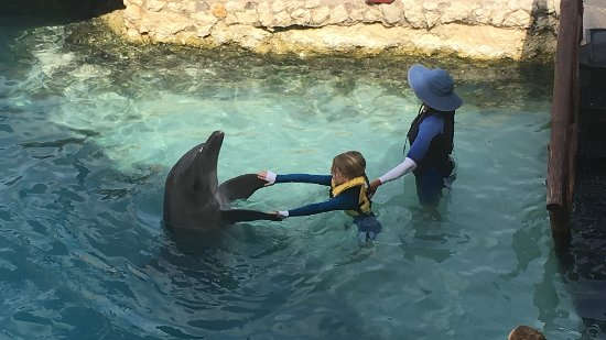 Dolphinaris Cozumel: Dancing with a dolphin!