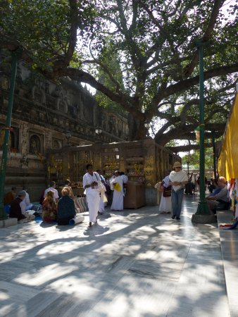 Eleven Directions Day Tours : Bodh Gaya - the Bodhi Tree where the Buddha was Enlightened