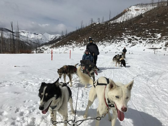 Absaroka Dogsled Treks: Loved this adventure with my family!